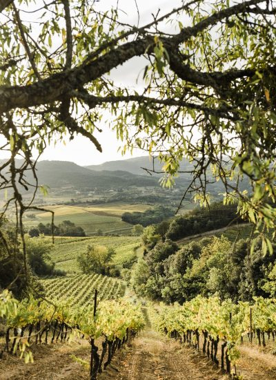 Domaine Calmel &Joseph -Culture Biologique - Sud de France