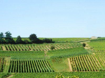Vignobles Haut-Rian - Bordeaux