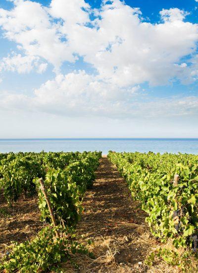 Wines & Brands Sélection Vins du Sud de France
